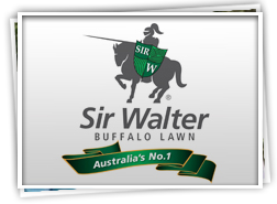 Sir Walter is proud to introduce Lady Jane Synthetic Grass