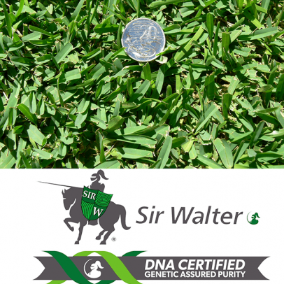Sir Walter DNA Certified Turf