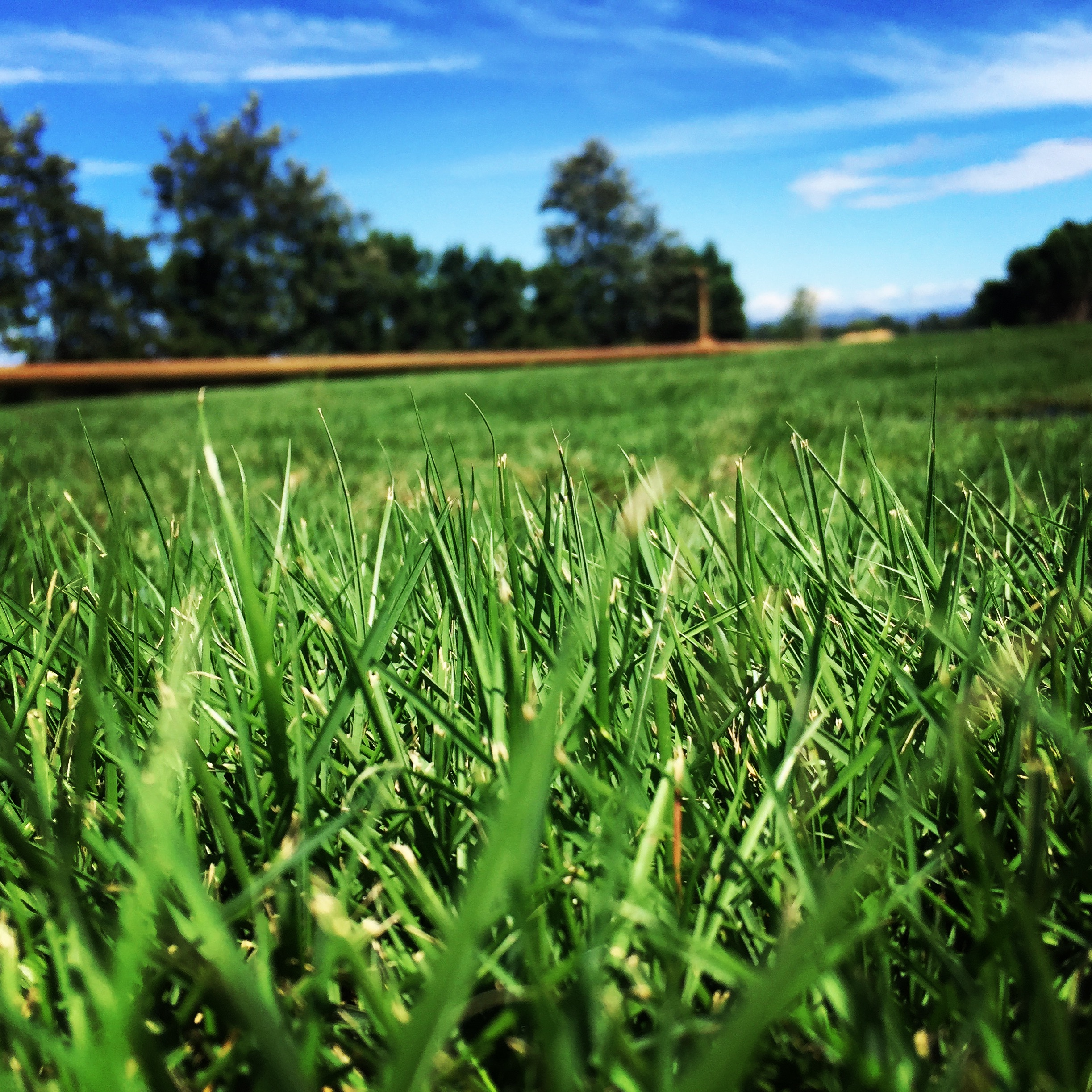 Greenerlawn Is Adding Sand To Lawns A Good Idea Or Not? Lawn Care -