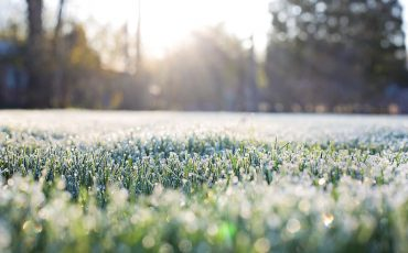 benefits of winter lawn installation