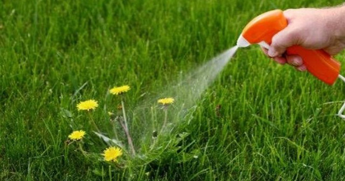 Water spray on lawn flower