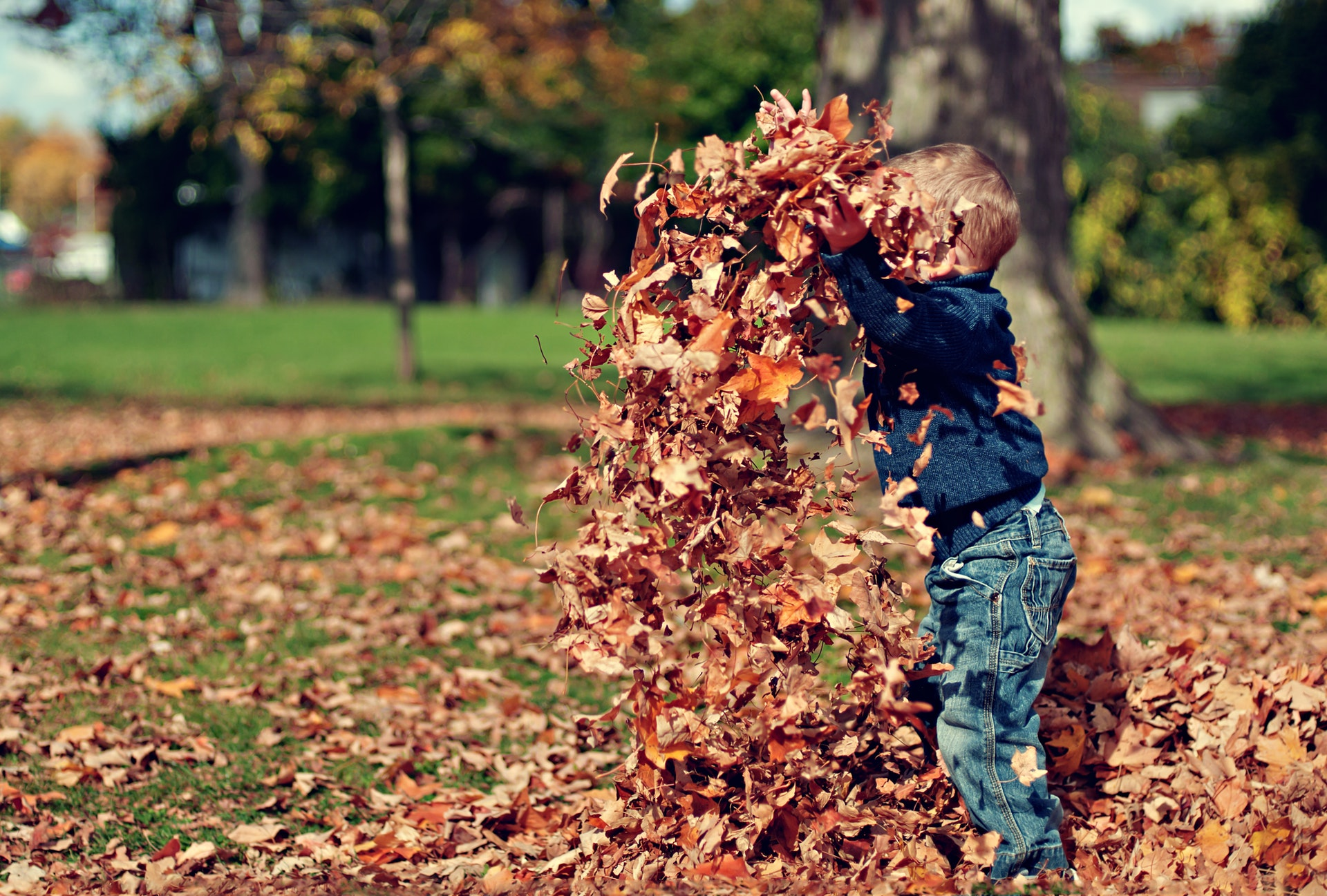 Kid playing in maple leaf