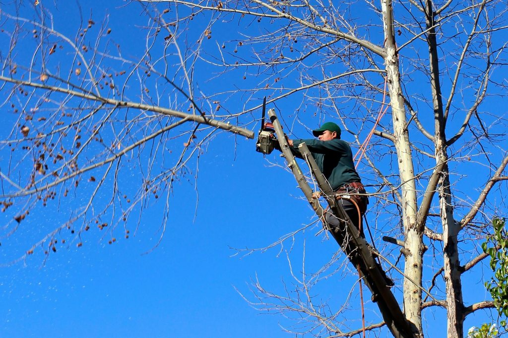 Cutting branches with chainsaw