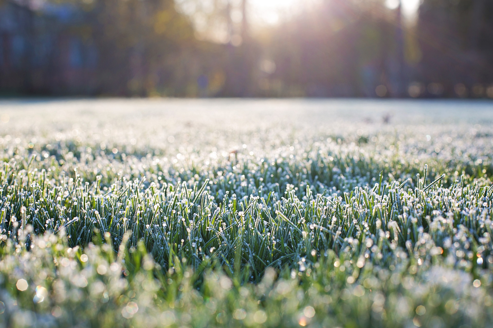 image of frost on grass